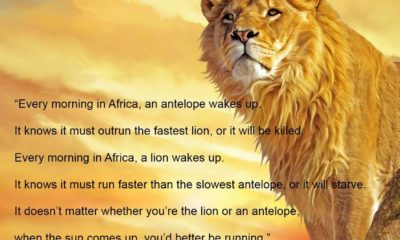 Better Be Running African Proverb Daily Quotes Sayings Pictures