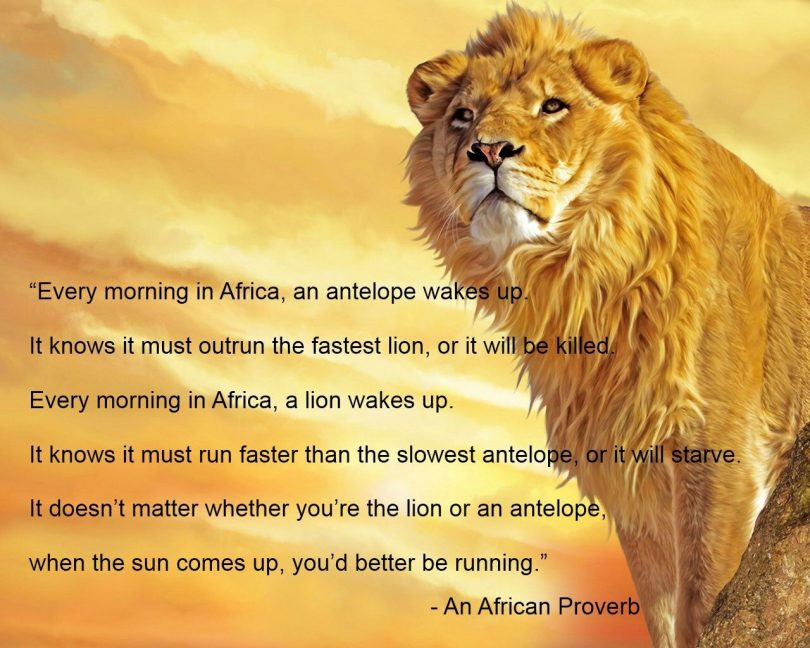 Every morning in Africa, an antelope wakes up. It knows it must outrun the fastest lion, or it will be killed. Every morning in Africa, a lion wakes up. It knows it must run faster than the slowest antelope, or it will starve. It doesn't matter whether you're the lion or an antelope, when the sun comes up, you'd better be running. - An African Proverb