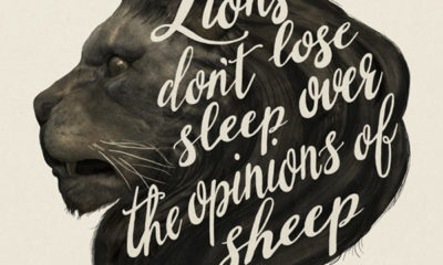 Lions Dont Lose Sleep