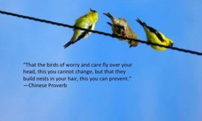 The Birds Of Worry