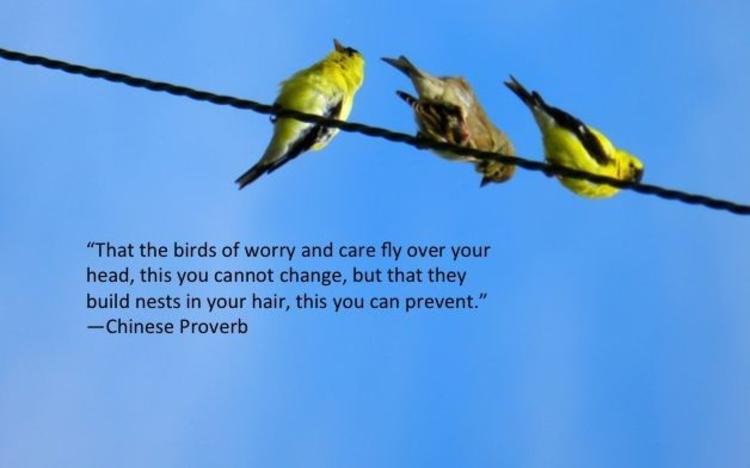 The Birds Of Worry