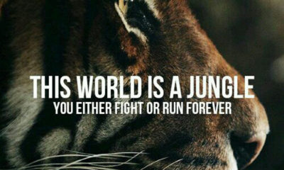 This World Is A Jungle