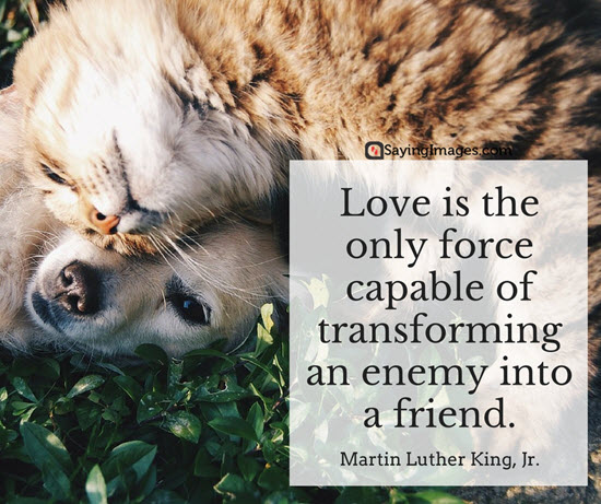 martin luther king quote love