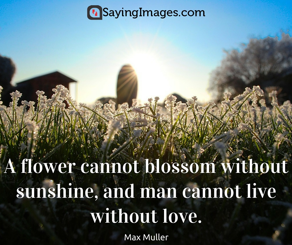 beautiful flowers quotes