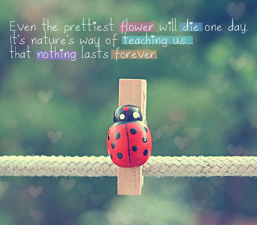 pretty flower quotes