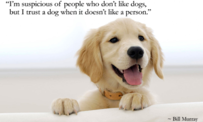 A Dog Doesnt Like A Person Bill Murray Daily Quotes Sayings Pictures