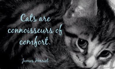 Cats Are Comfort