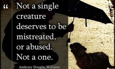 Mistreated Or Abused