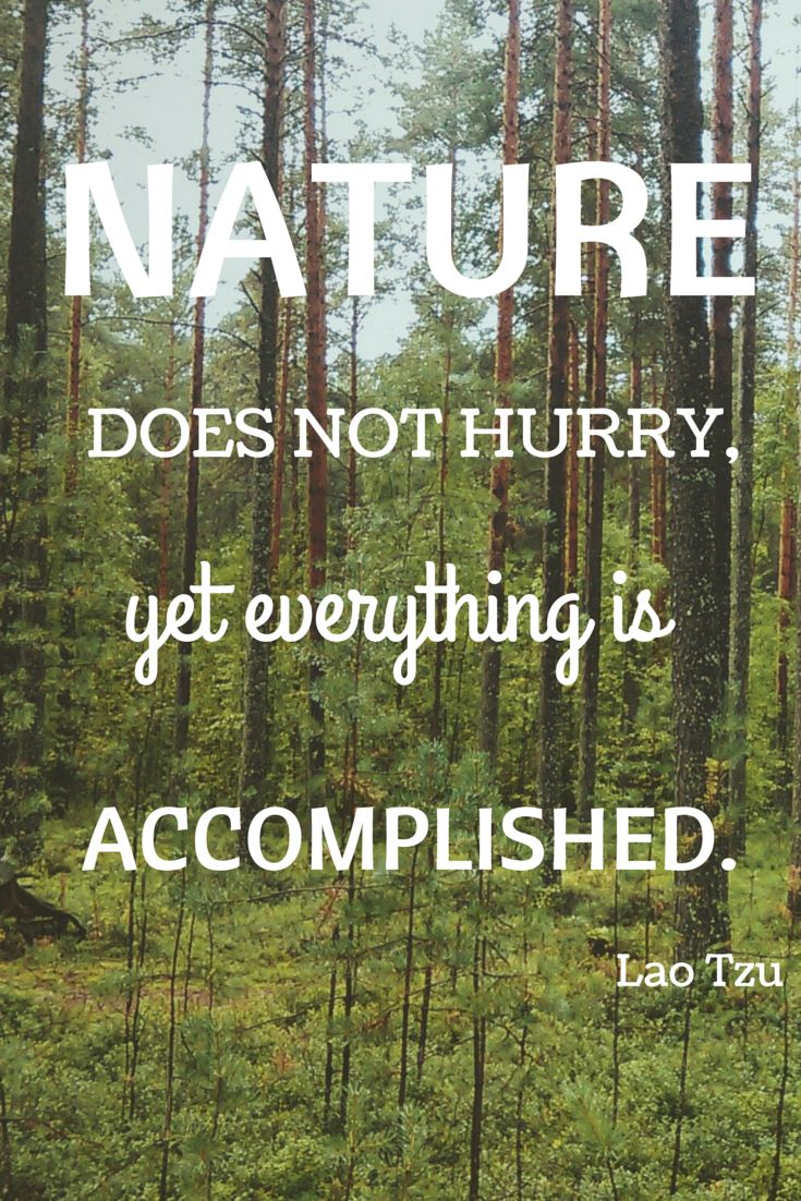 Nature Does Not Hurry