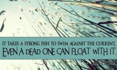Struggle Against The Current