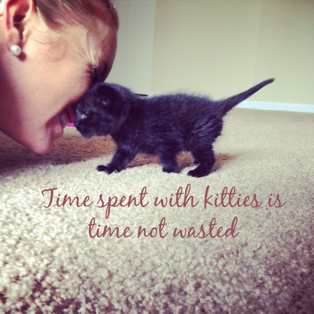 Time Spent With Kitties