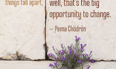 When Things Fall Apart Pema Chodron Daily Quotes Sayings Pictures