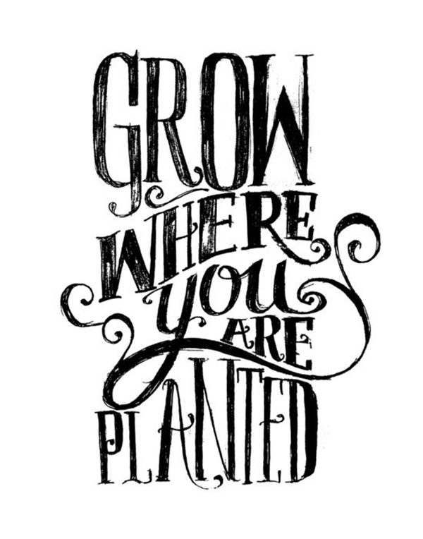 Where You Are Planted