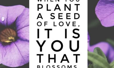 A Seed Of Love
