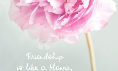 Friendship Is Like A Flower