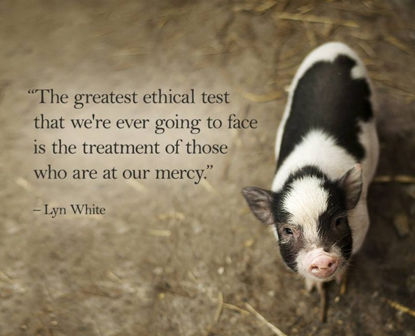 The greatest ethical test that we're ever going to face is the treatment of those who are at our mercy. - Lyn White