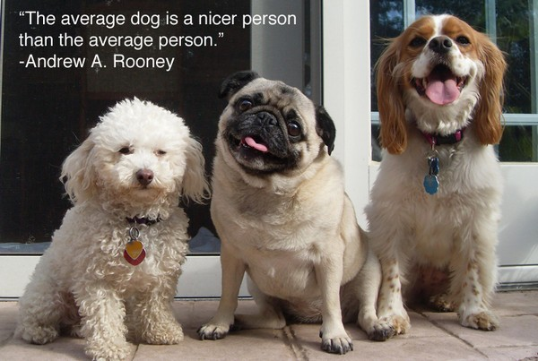 1493346852 588 52 Funny Dog Quotes With Images