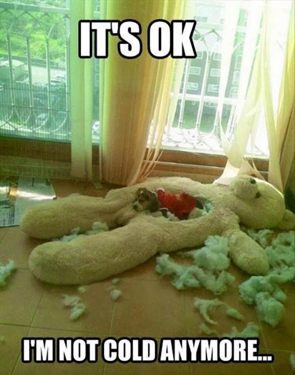 Dog Quotes Meme