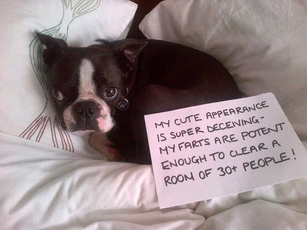 Dog Death Quotes