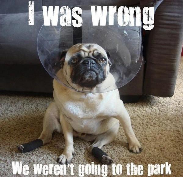 Good Dog Quote