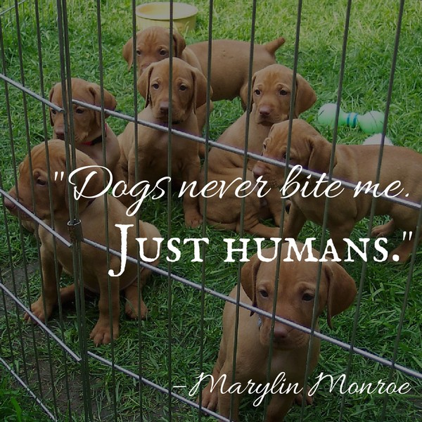 Ultimate Dog Quotes