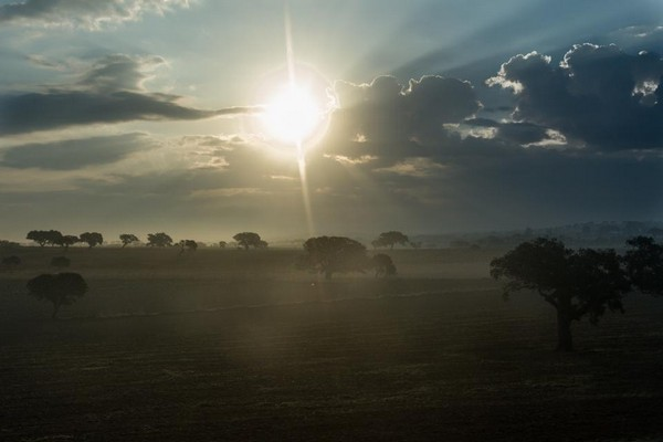 sunshine good morning images