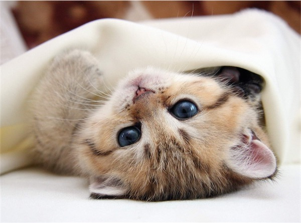 Cute Morning Images Pictures Cats Kittens