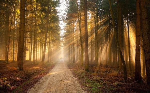 Early Morning Sunrise Image Forest