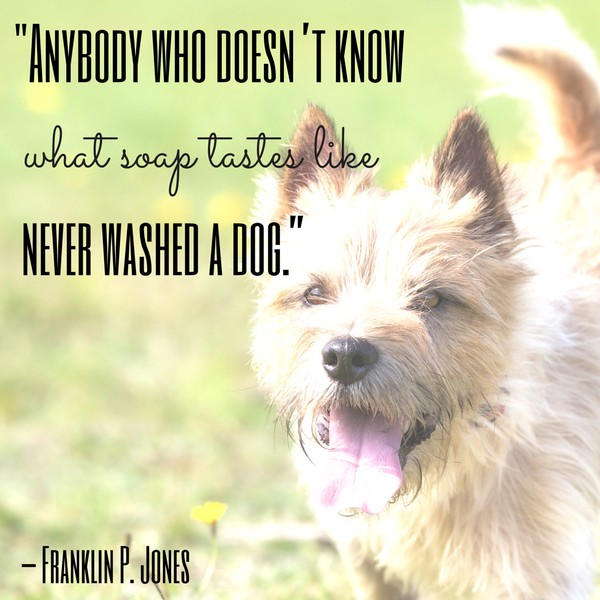 Dog Day Afternoon Quotes