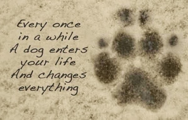Dog Isnpirational Quotes