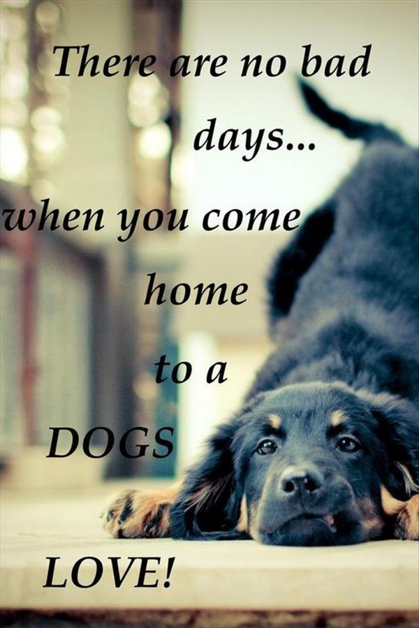 Dog Quotes About Love