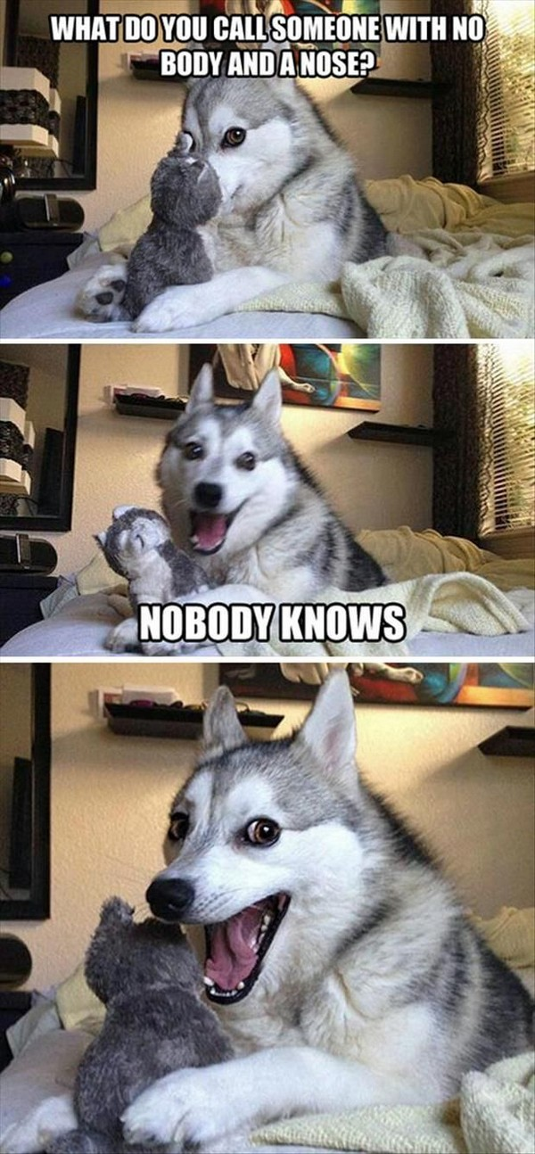 Funny Dog Quotes Pinterest