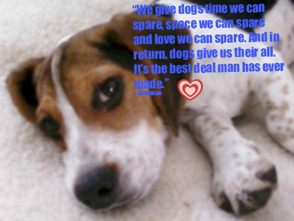 Very Funny Dog Quotes