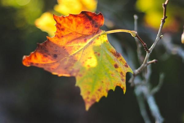 good morning sunlight leaf