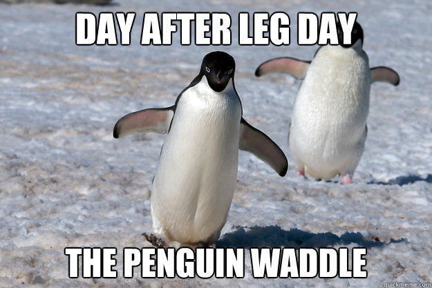 1504891069 957 25 Hilarious After Leg Day Meme