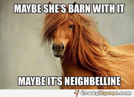 1508165603 851 20 Funny Horse Memes For Equine Lovers