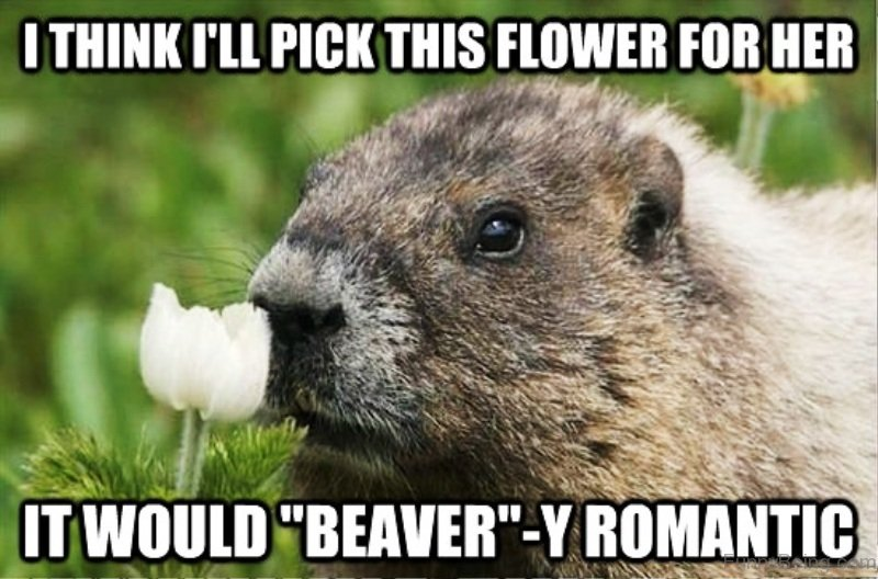 1510880543 199 22 Romantic Memes For Your Beloved