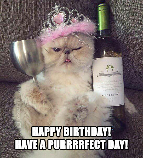 1513790652 135 20 Cat Birthday Memes That Are Way Too Adorable