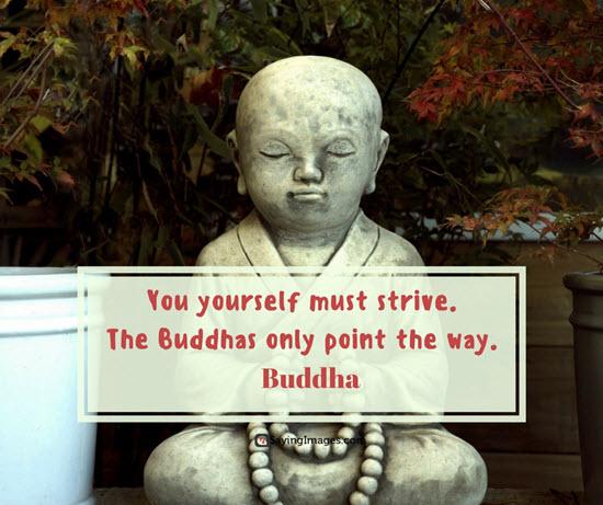 buddha strive quotes