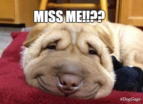 20 Funny I Miss You Memes For When You Miss Someone So Bad ...