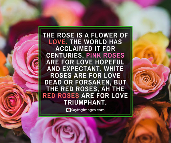 roses meaning quotes