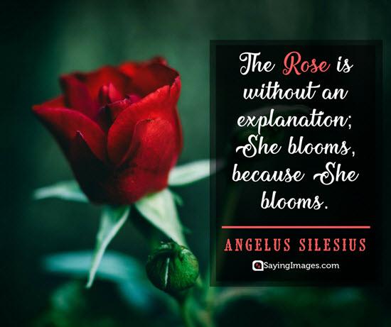 roses angelus silesius quotes