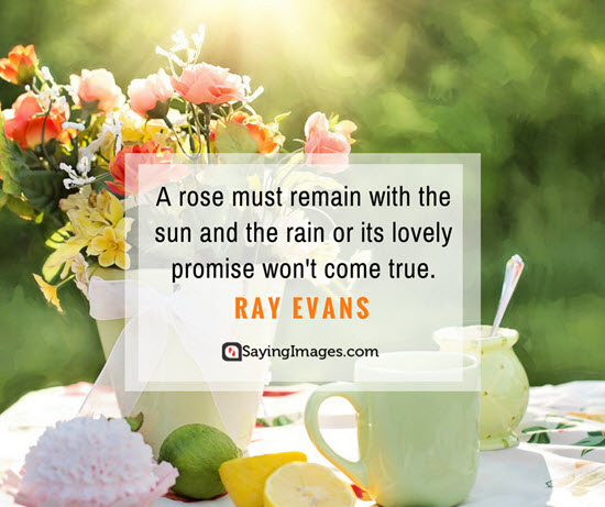 roses ray evans quotes