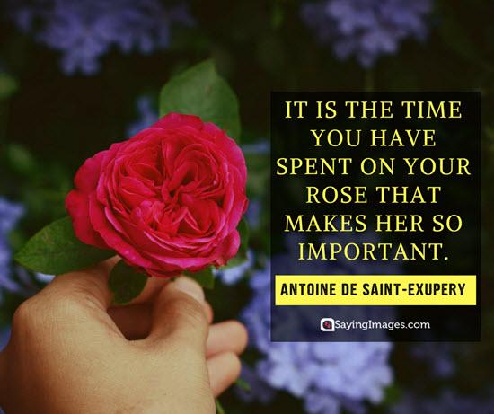 roses antoine de saint exupery quotes