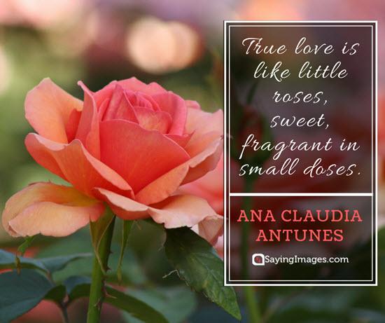 roses ana claudia antunes quotes